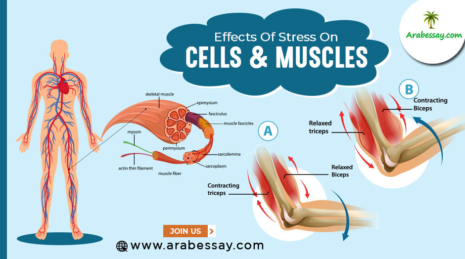 Cells And Muscles